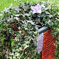 Gevlochten bloembak